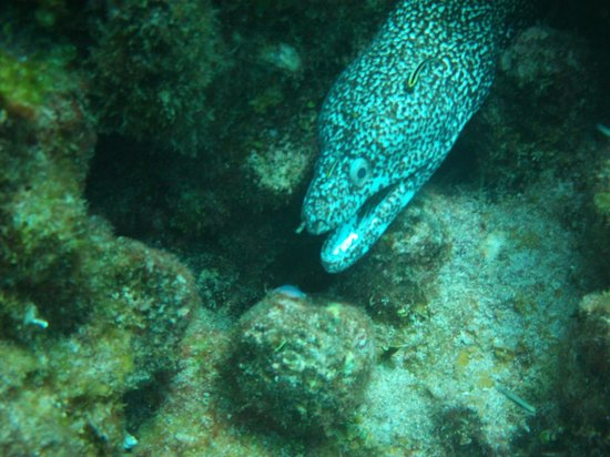 Bahama Divers : Several eels were spotted on all the dives