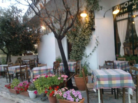 En Hatipi : Our garden