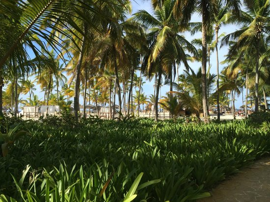 Catalonia Bavaro Beach, Casino & Golf Resort : Vista de la playa desde la entrada a las habitaciones (Privilege)