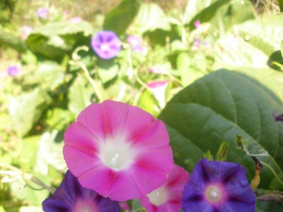 Jardines Botánicos de Johannesburgo y Presa Emmarentia: 14