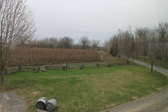 The Grange of Prince Edward Vineyards and Estate Winery: Can;t wait to see the grapes