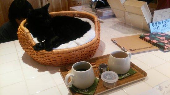 Cat Cafe Nekobiyaka