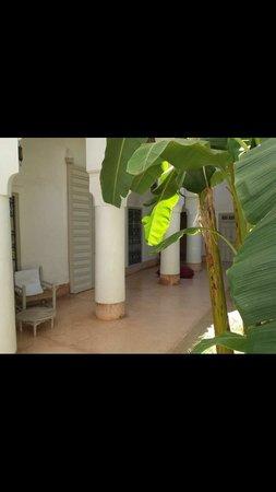 Le Riad Berbère: Garden