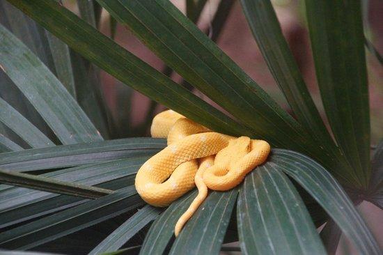 Foundation Jaguar Rescue Center : Snake