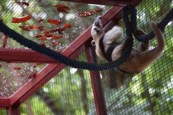 Foundation Jaguar Rescue Center : Ant Eater