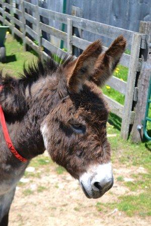 Donkey Sanctuary of Canada: Ears perked up