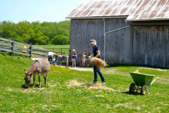 Donkey Sanctuary of Canada: Volunteers run the sanctuary