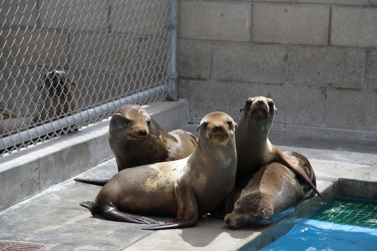 ‪Pacific Marine Mammal Center‬