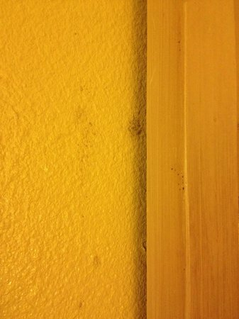 Econo Lodge Inn & Suites Maingate Central: More mold.