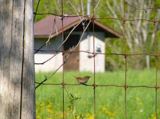 Mountsberg Conservation Area: Bird on the fence
