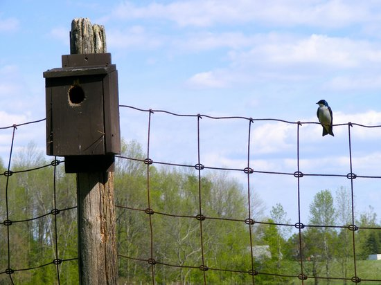 Mountsberg Conservation Area: Swallow and it's house