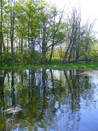 Mountsberg Conservation Area: Pretty reflections and ripples