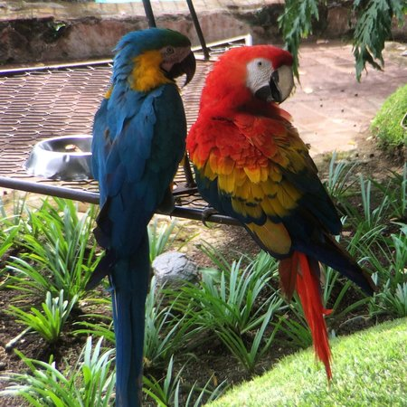 Hotel Museo Spa Casa Santo Domingo : Lots of macaws around the pool
