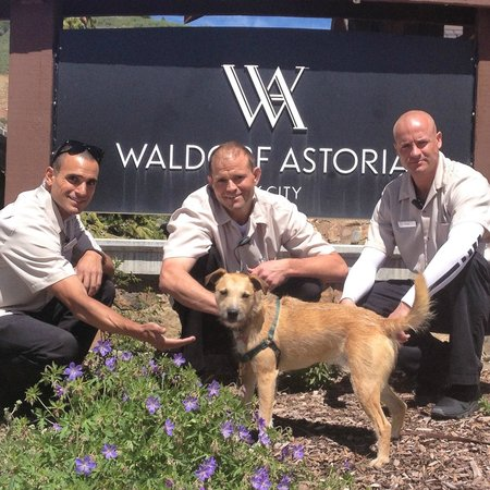 Waldorf Astoria Park City: The Handsome fellas