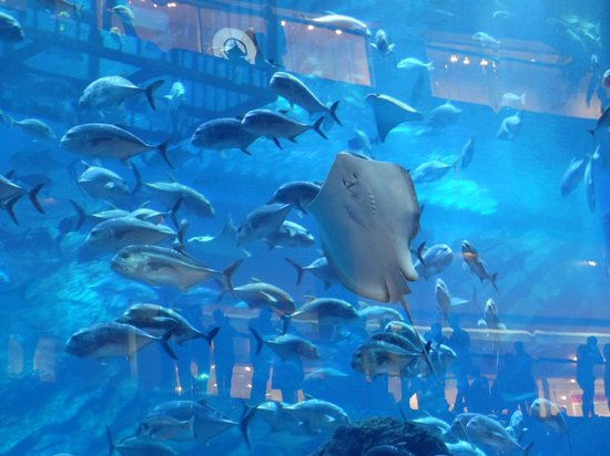 The Dubai Mall : Fish in the aquarium