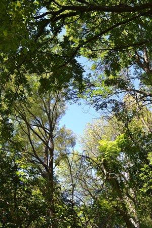 Toogood Pond Park : Canopy
