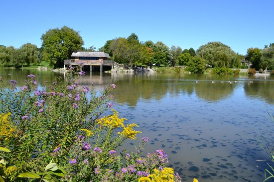 Flowers And Pond Picture Of Toogood Pond Park Markham