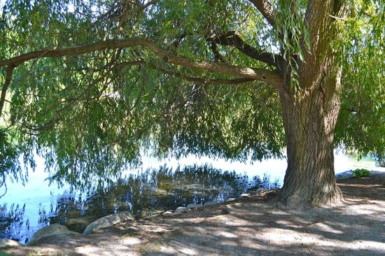 Toogood Pond Park: Tree along the water