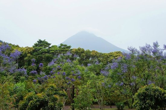 Flower Park Kagoshima: ジャカランダと開聞岳