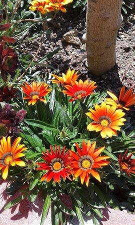 Vila Gersina: Flowers