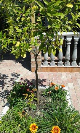 Vila Gersina: Residence Grounds