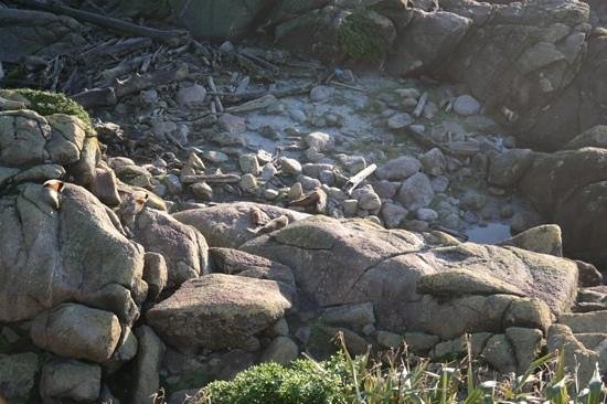 Cape Foulwind Seal Colony : oh.. the life of a seal.