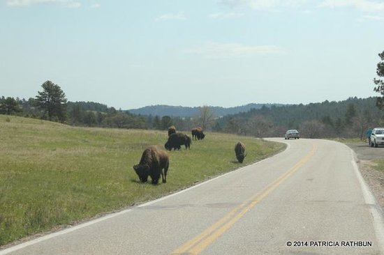 Iron Mountain Road : Wildlife Everywhere