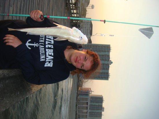 Cherry Grove Pier: Sharks!!