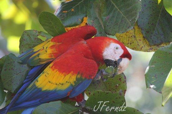 Birding Costa Rica - Tours