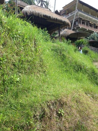 Tegalalang Rice Terrace: Run down