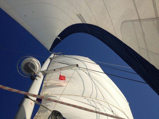 Ecologic Divers : Sail