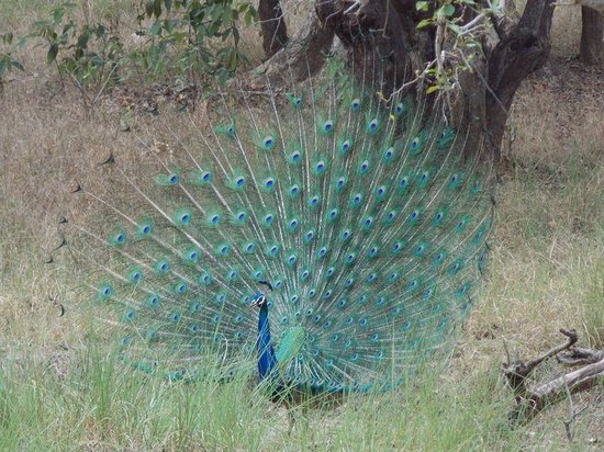Bagh Tola Kanha: beauty