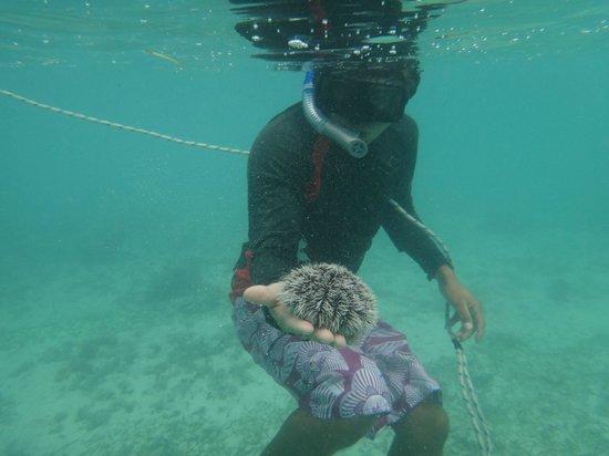 Plage d'Akumal: Akumal Beach Snorkling with a guide