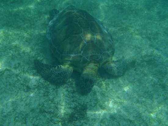 Plage d'Akumal: Akumal Beach Snorkling with a guide