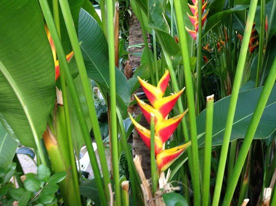The Palms Hotel- Key West: Flowers of Key West - LOVE this heliconia