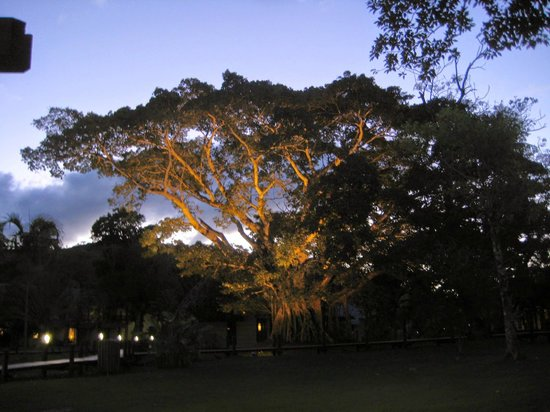 Hôtel Tieti Poindimié: superbe arbre