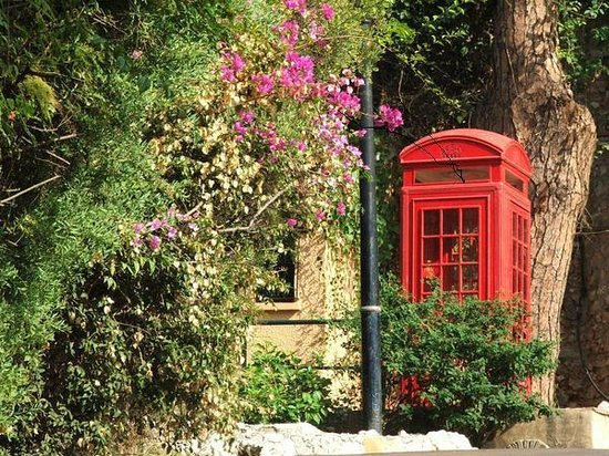 Gibraltar Botanic Gardens (The Alameda): sad sight