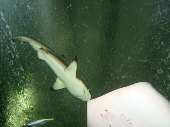 Water World Lanka: Favorite SHARK