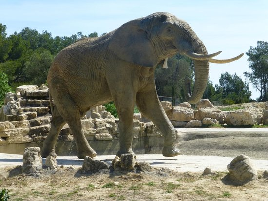 Réserve Africaine de Sigean : Elephant