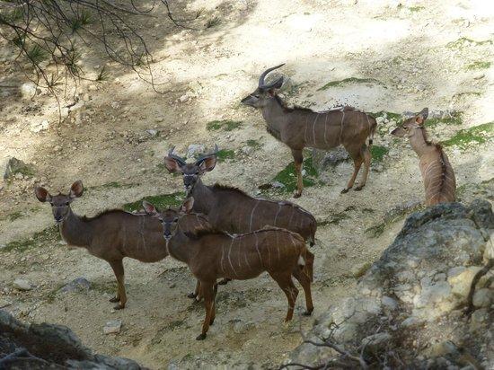 Réserve Africaine de Sigean : Antelopes