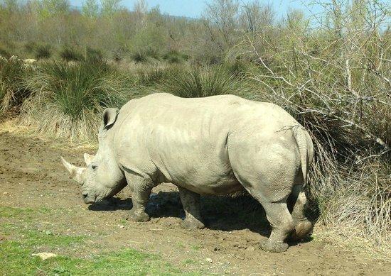 Réserve Africaine : Rhino