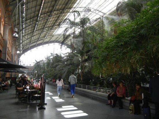 Estación de Atocha: Тропики