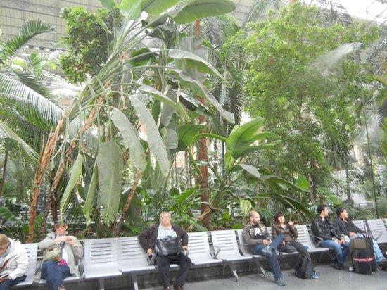 Estación de Atocha: Тропический сад