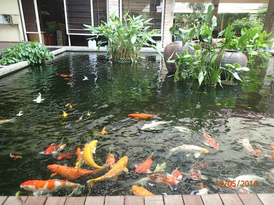 Feung Nakorn Balcony Rooms & Cafe : fishpond