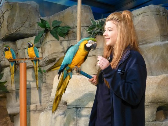 Pleasure Island: The Bird Show (featuring Scruffy the Parrot)
