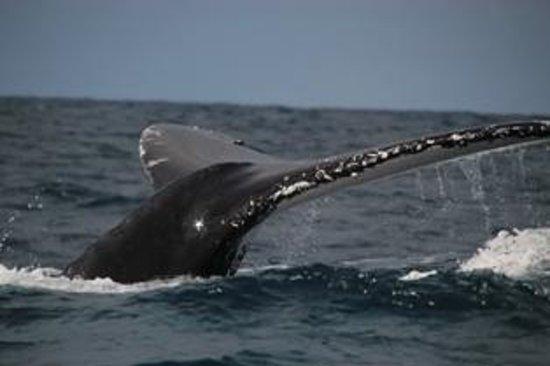 Zavora Lodge: Whales are here! June 2014