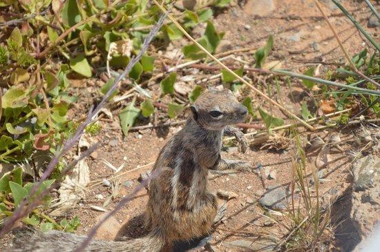 R2 Bahia Playa : Les P'tits écureuils