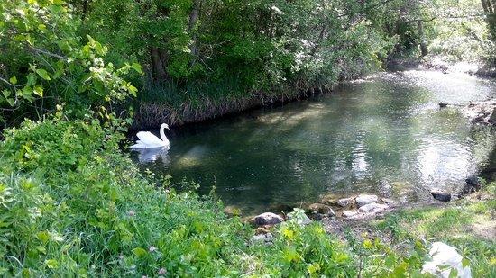 Côté Provence : Bord de Sorgue
