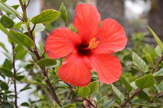 R2 Bahia Playa Hotel & Spa : Floral