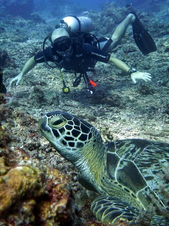 Uber Scuba: The chillest turtle in the world